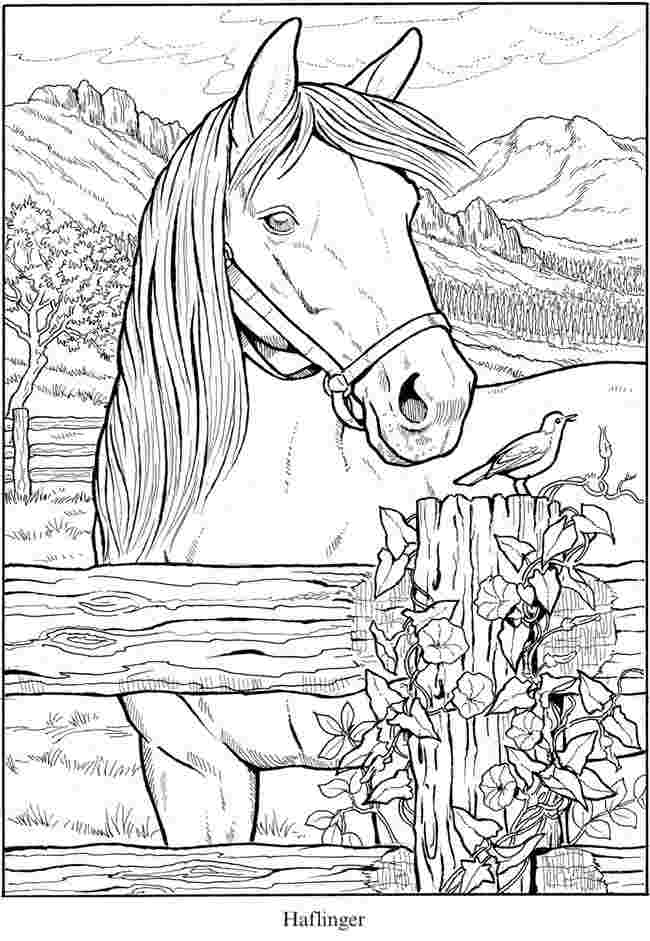 printable horse colouring pages 17 free printable horses coloring pages for kids gtgt disney printable pages horse colouring
