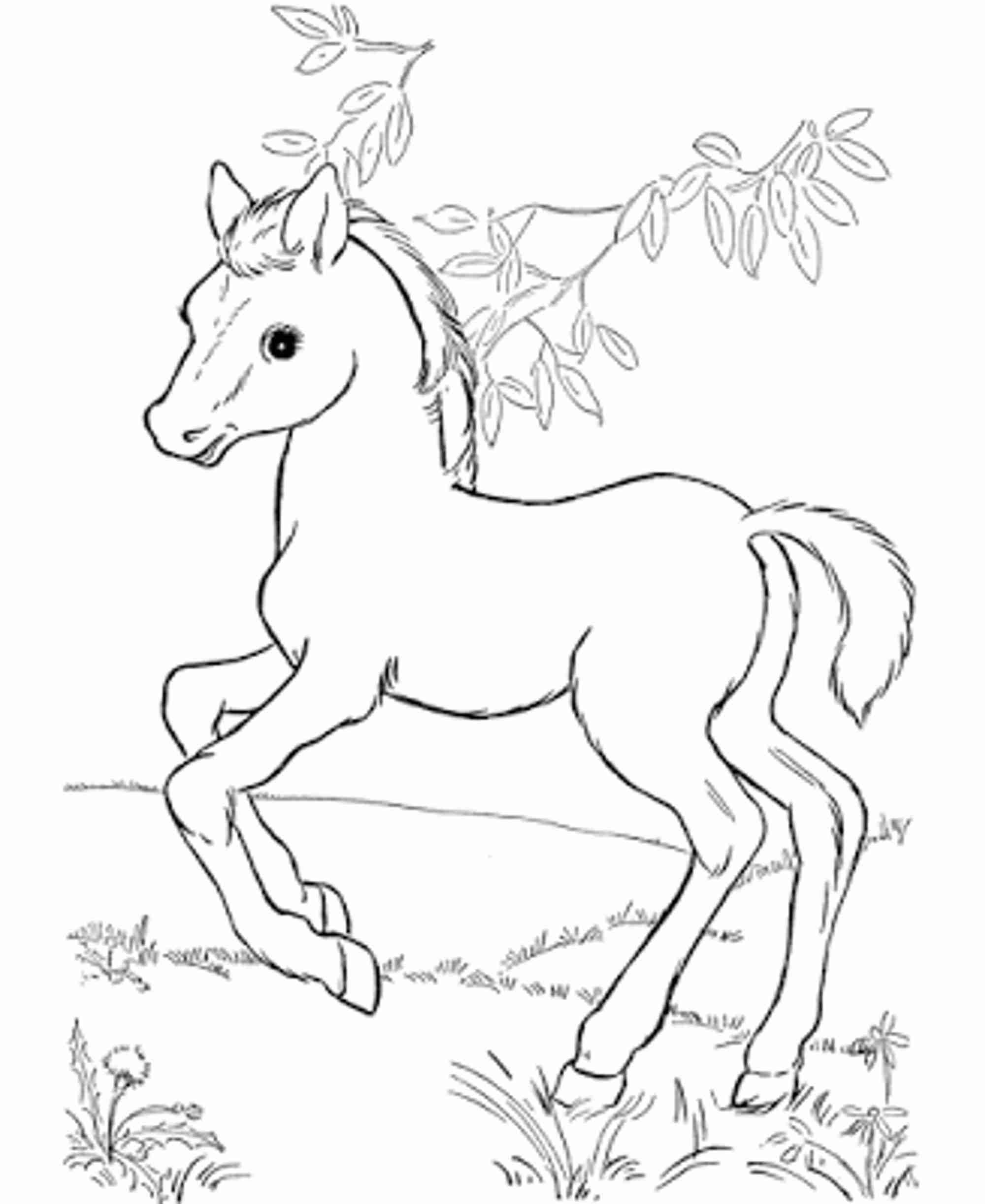 printable horse colouring pages horse coloring pages birthday printable horse printable colouring pages