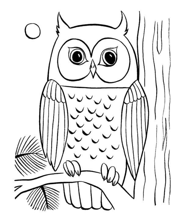 printable owl images clipart fall owls color clipground owl printable images