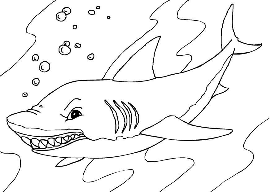 printable shark pictures free printable shark coloring pages for kids pictures shark printable