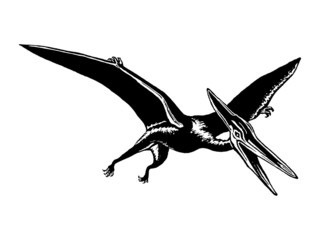 pterodactyl images bridgewater triangle massachusetts legends of america images pterodactyl