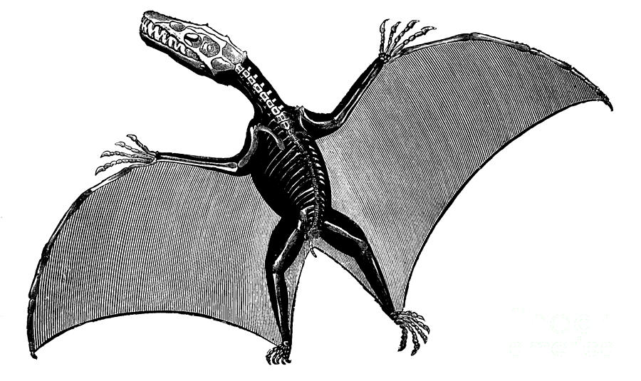 pterodactyl images interesting facts about the pterodactyl pterodactyl images