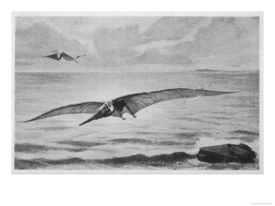 pterodactyl images order viii pterosauria ornithosauria seeley pterodactyl images