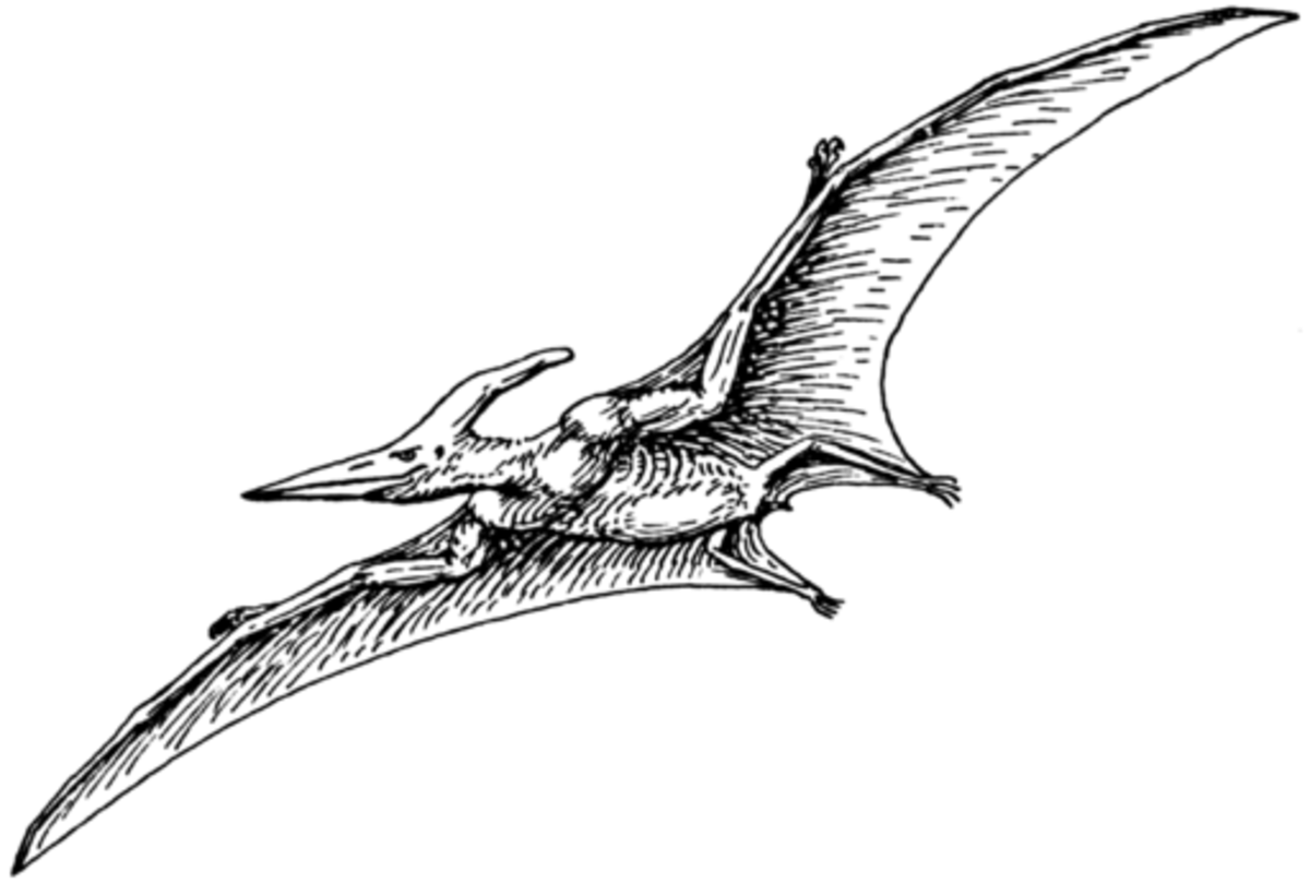 pterodactyl images pterodactyl extinct flying reptile photograph by science source images pterodactyl