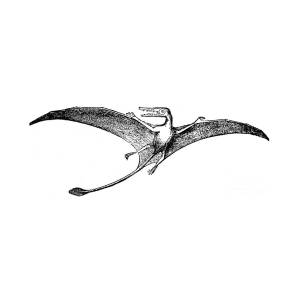 pterodactyl images pterodactyl stock illustration download image now istock images pterodactyl