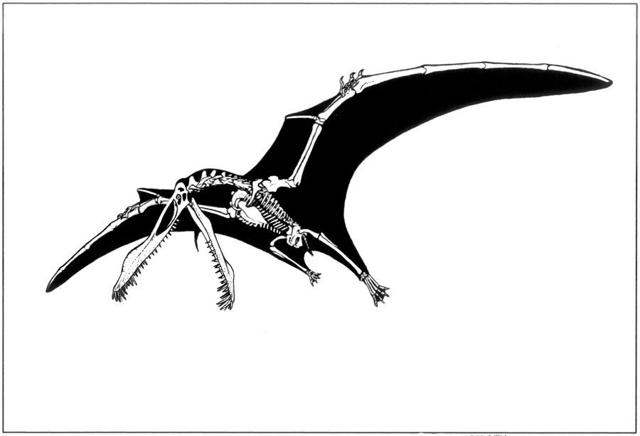 pterodactyl images pterodactylus facts and pictures pterodactyl images