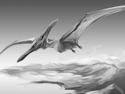 pterodactyl images texas cryptid hunter do pterosaur fossils found in the dfw area explain thunderbird sightings images pterodactyl