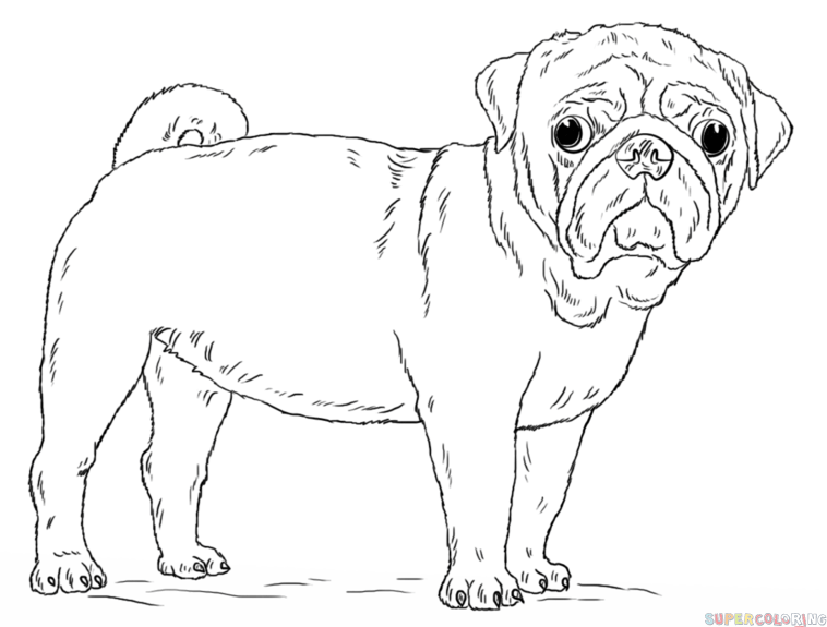 pug puppy coloring pages how to draw a pug dog step by step drawing tutorials for coloring pages pug puppy