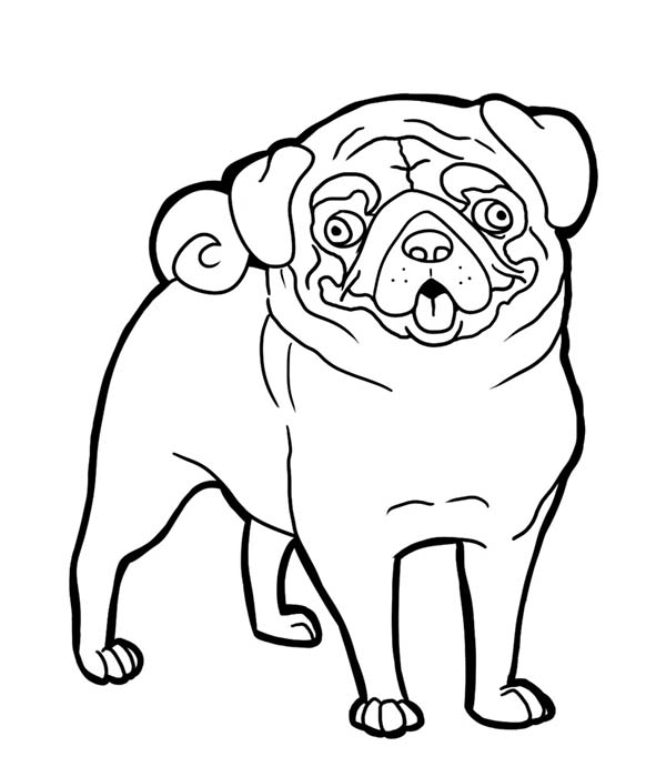 pug puppy coloring pages pug funny face coloring page pug funny face coloring page pug coloring pages puppy