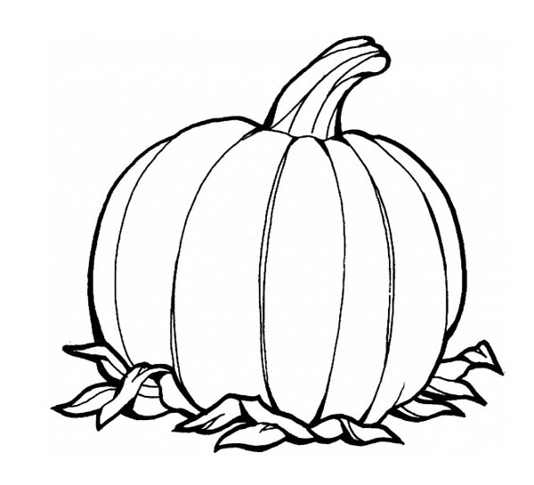 pumpkin colouring page awesome pumpkins fruit coloring page download print pumpkin colouring page