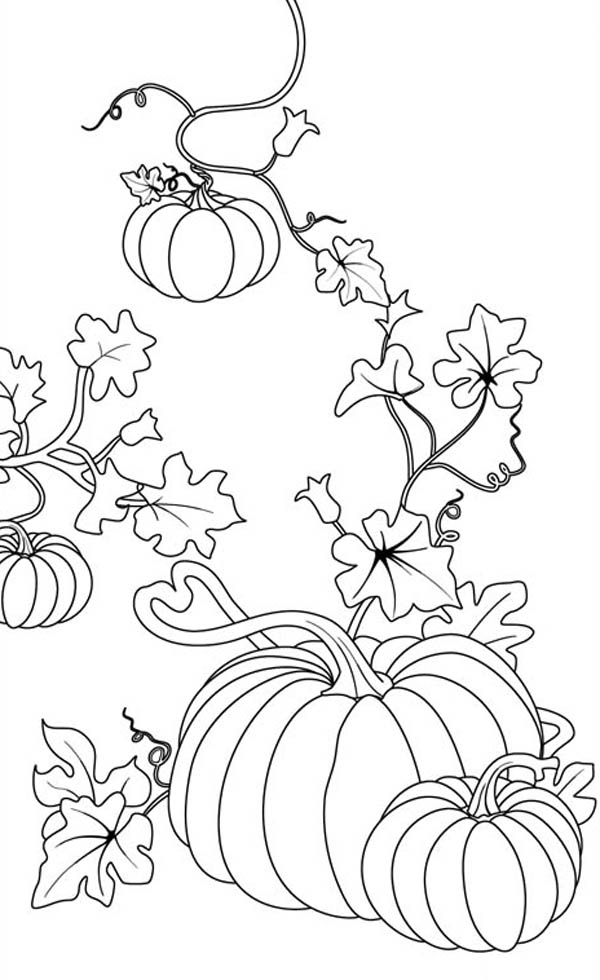 pumpking coloring pages pumpkin two pumpkin with bucket full of apple to color pages pumpking coloring