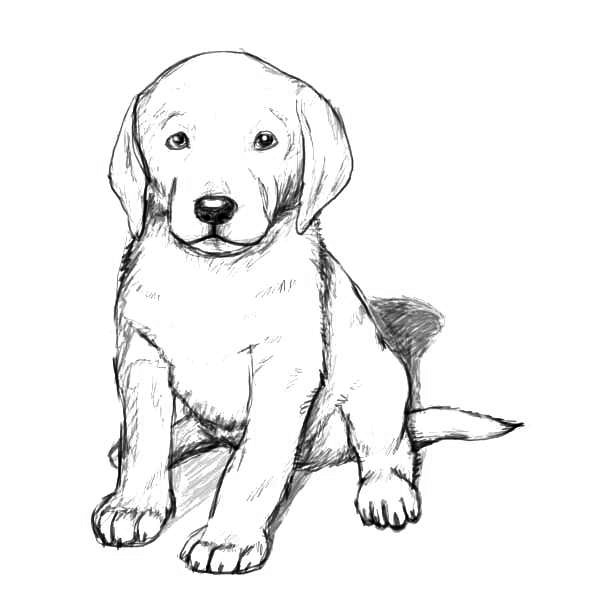 puppy realistic dog coloring pages 25 best wolf coloring pages images on pinterest coloring coloring realistic pages puppy dog