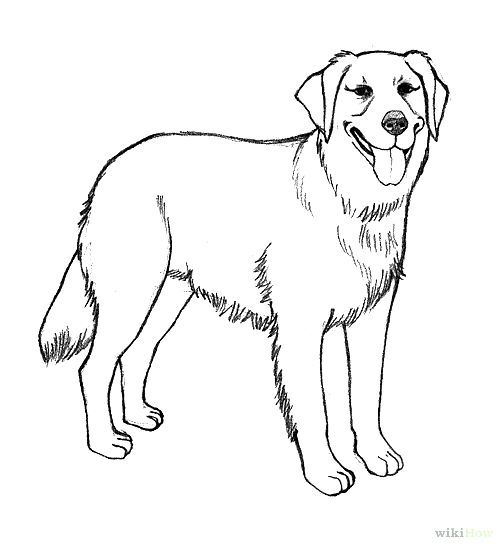 puppy realistic dog coloring pages 30 free printable cute dog coloring pages scribblefun puppy realistic coloring pages dog