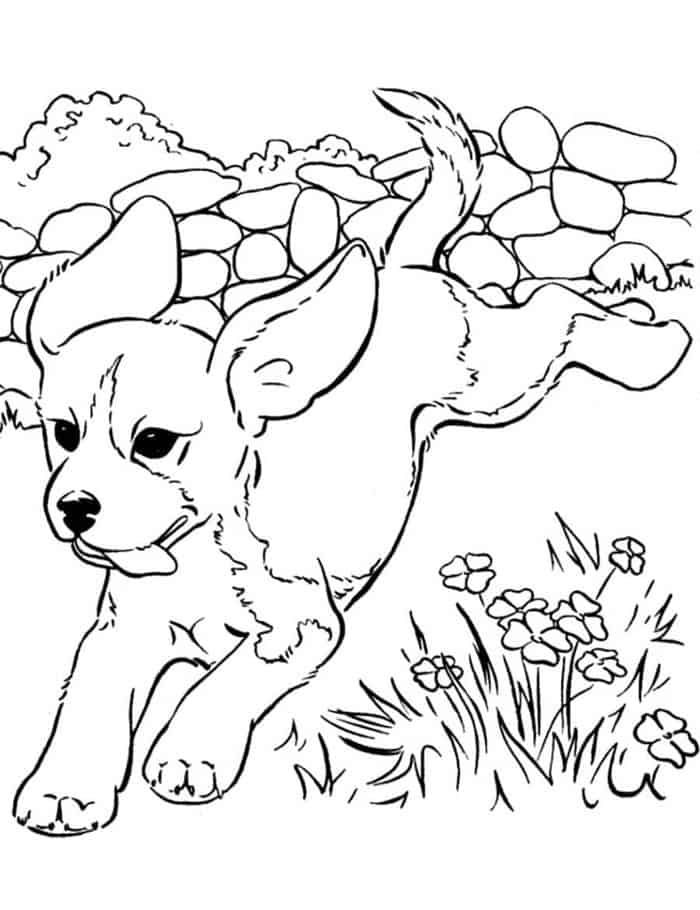 puppy realistic dog coloring pages golden retriever coloring pages best coloring pages for kids coloring dog puppy pages realistic