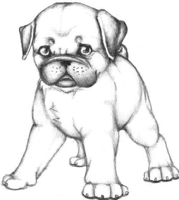 puppy realistic dog coloring pages printable dog coloring pages for kids cool2bkids coloring pages puppy dog realistic
