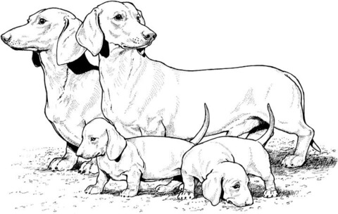 puppy realistic dog coloring pages puppy realistic dog coloring pages realistic dog coloring puppy pages
