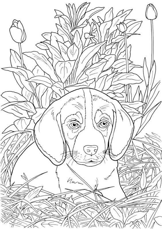 puppy realistic dog coloring pages realistic dog coloring pages inspirational coloring book realistic pages puppy dog coloring