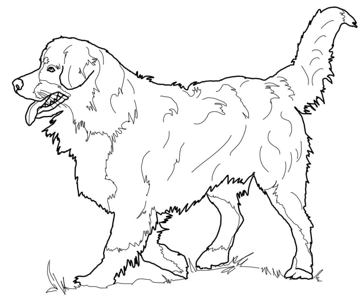 puppy realistic dog coloring pages realistic golden retriever coloring pages photo dog dog coloring puppy pages realistic