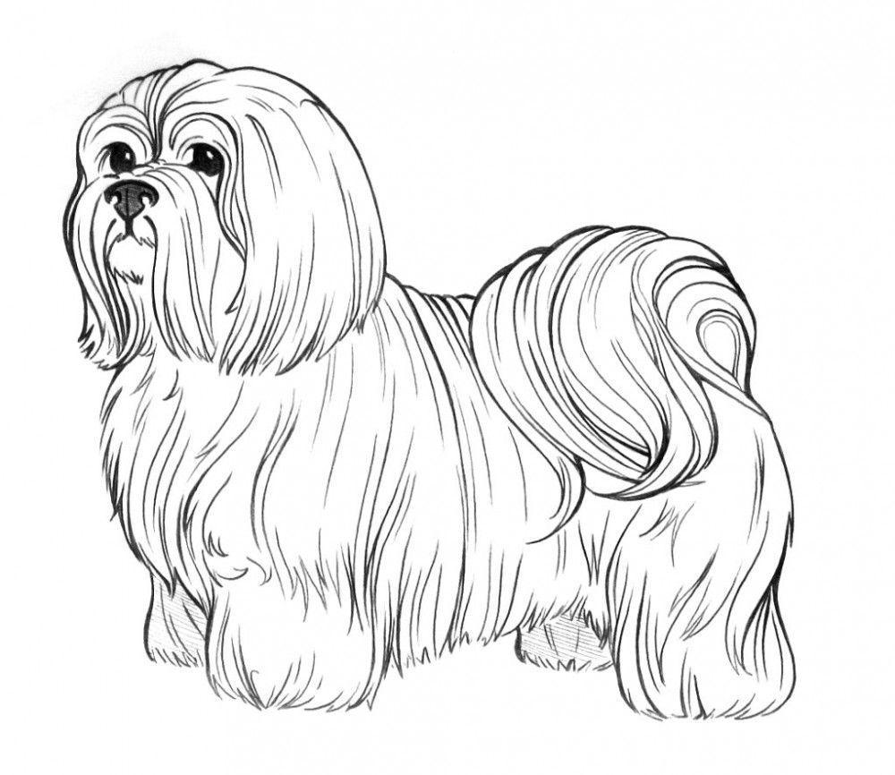 puppy realistic dog coloring pages realistic puppy coloring pages coloring home realistic puppy coloring dog pages