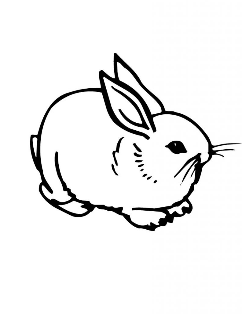 rabbit coloring image cute bunny coloring pages to download and print for free image rabbit coloring