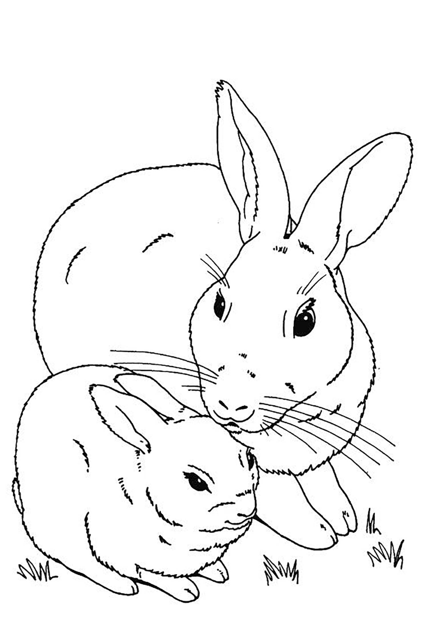rabbit pictures for kids for colouring printable rabbit coloring pages for kids cool2bkids rabbit pictures for colouring for kids