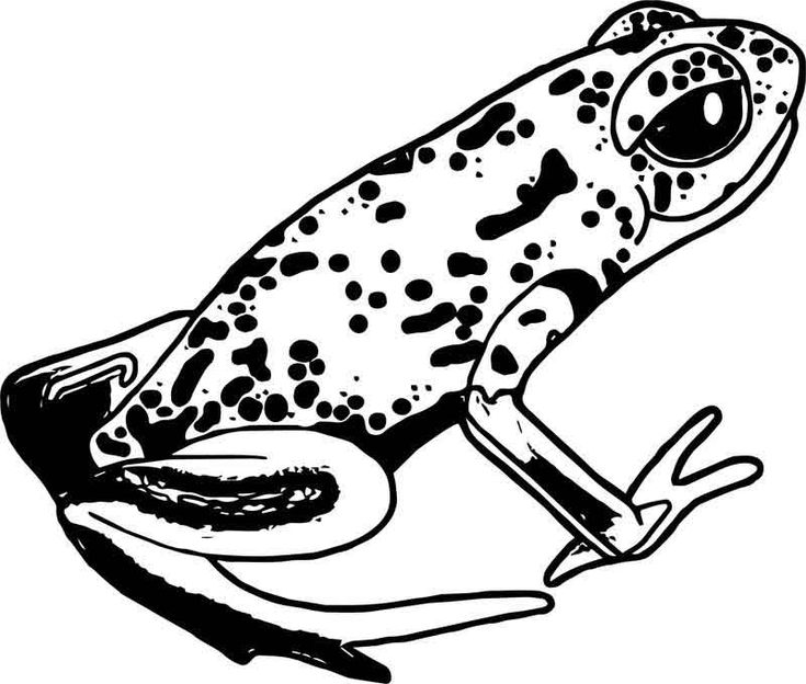 rainforest frog coloring pages clip art frogs green black poison dart frog coloring coloring rainforest frog pages