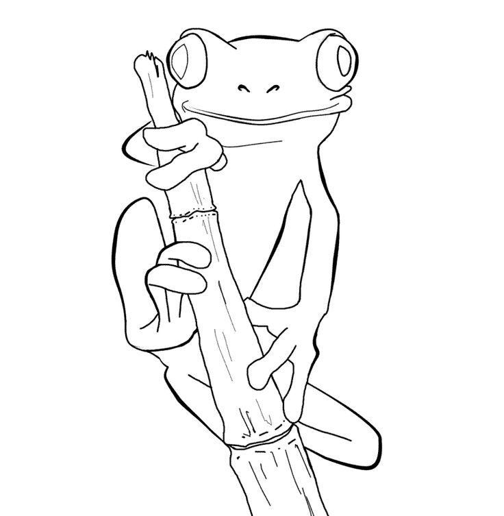 rainforest frog coloring pages clip art frogs pasco poison dart frog coloring page pages frog rainforest coloring