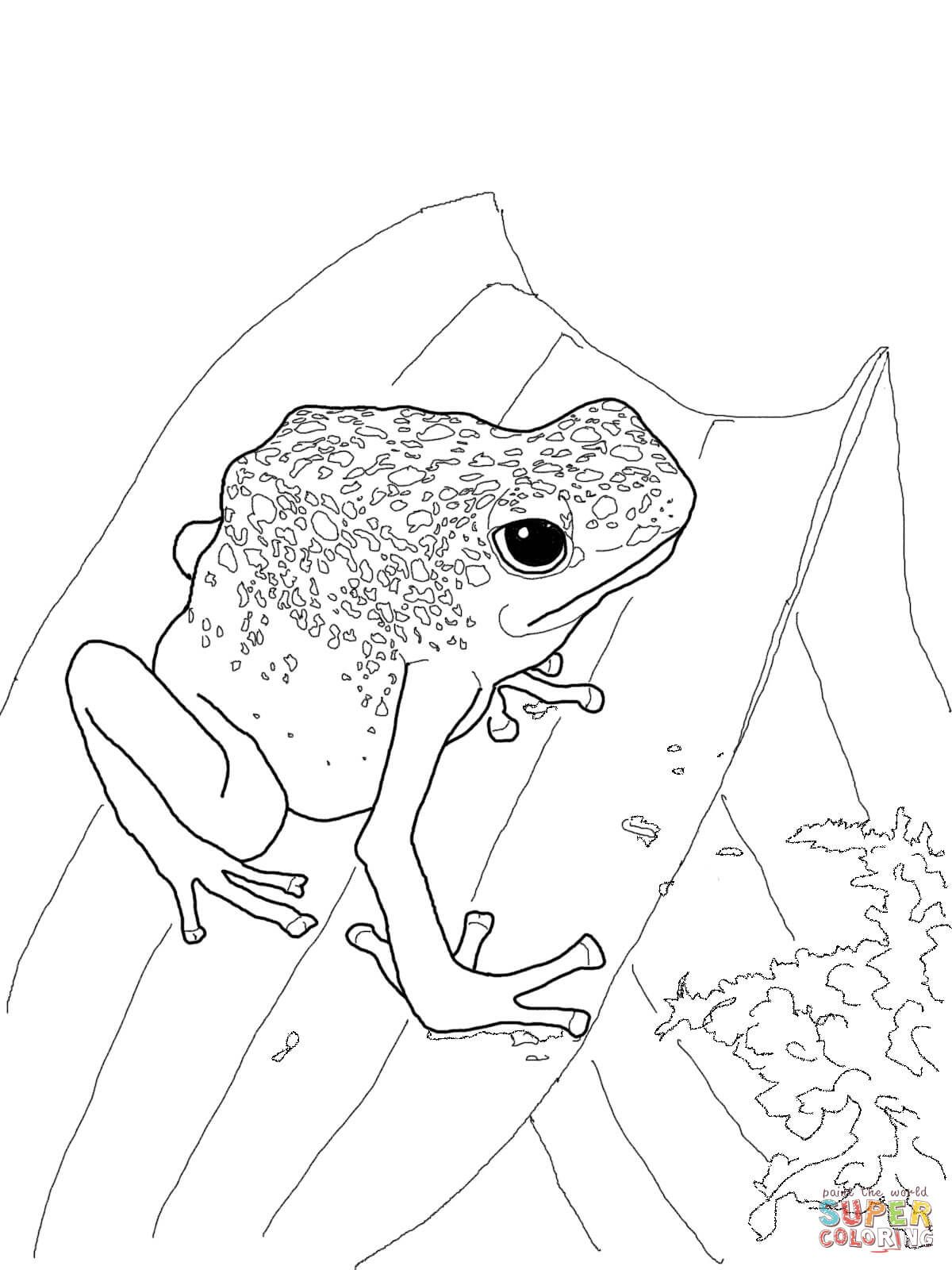 rainforest frog coloring pages poison dart frog coloring pages blue poison dart frog coloring rainforest pages frog