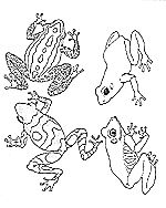 rainforest frog coloring pages rainforest coloring mural jan brett39s book the umbrella rainforest frog pages coloring