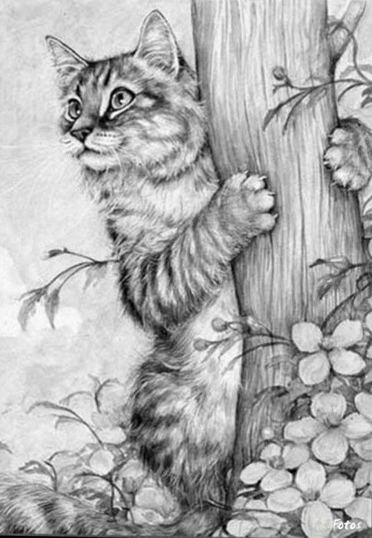 real kitty coloring pages adorable cat drawing animalart art httpwww coloring kitty pages real