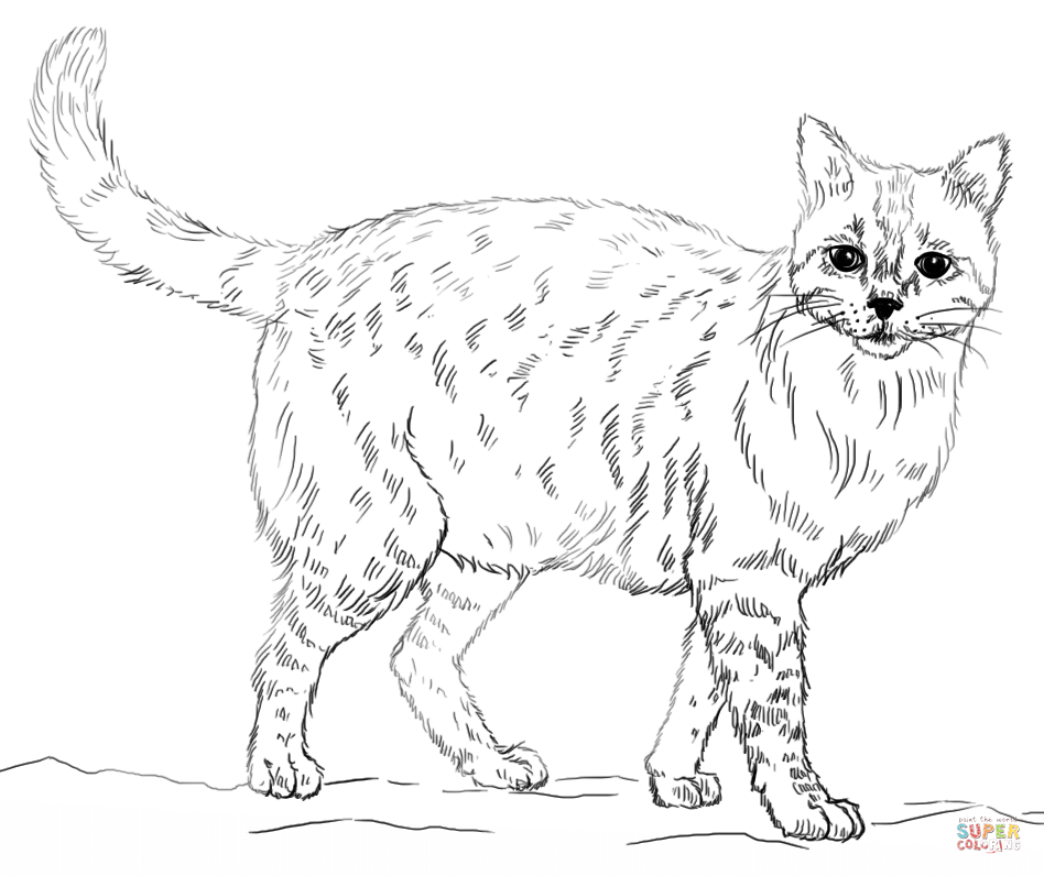 Real kitty coloring pages