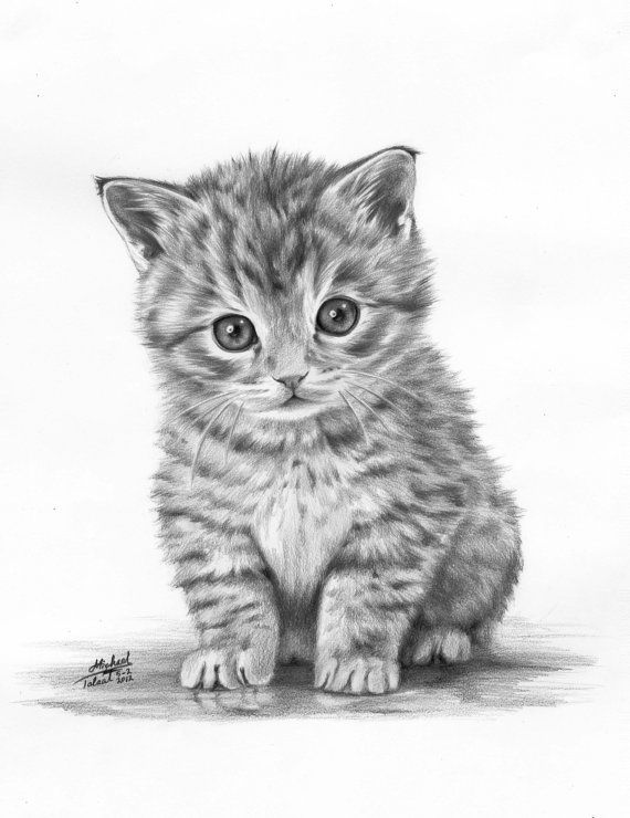 real kitty coloring pages coloring for adults kleuren voor volwassenen Çizim pages coloring real kitty