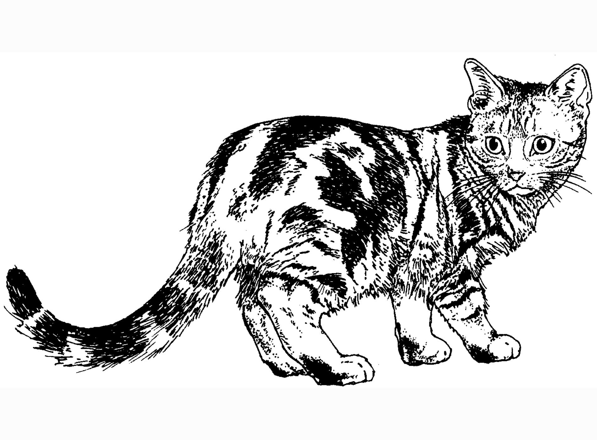 real kitty coloring pages coloring pages cat real kitty pages coloring