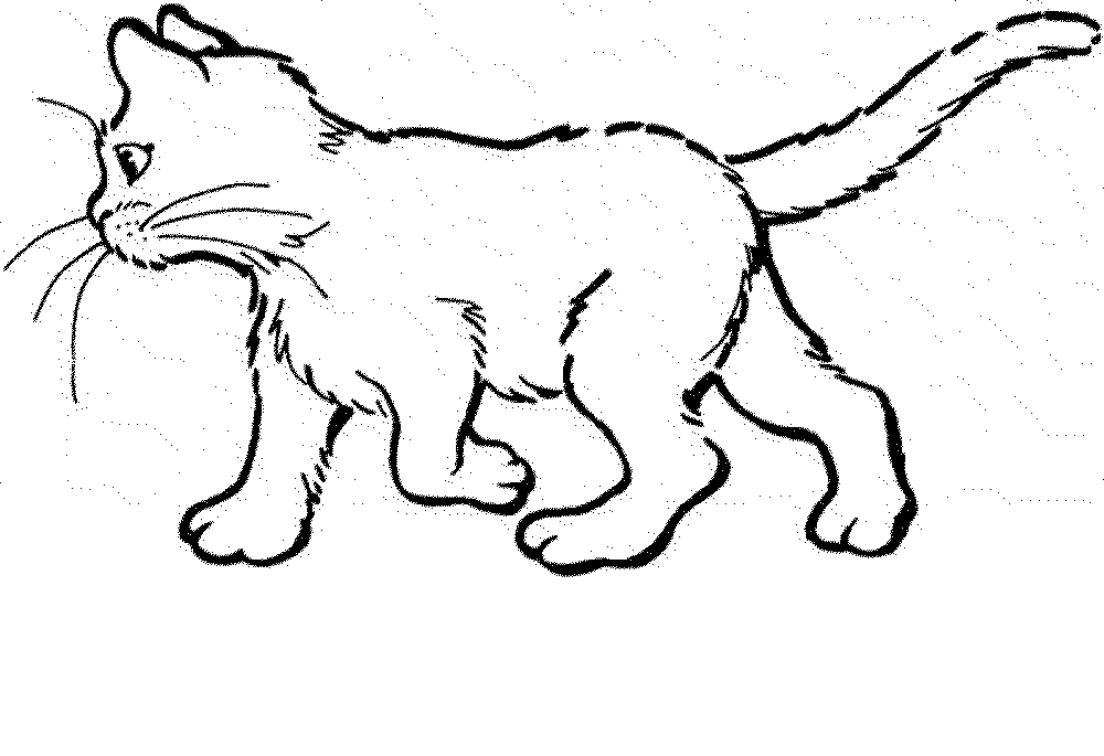 real kitty coloring pages cute kitten drawing at getdrawings free download real kitty pages coloring