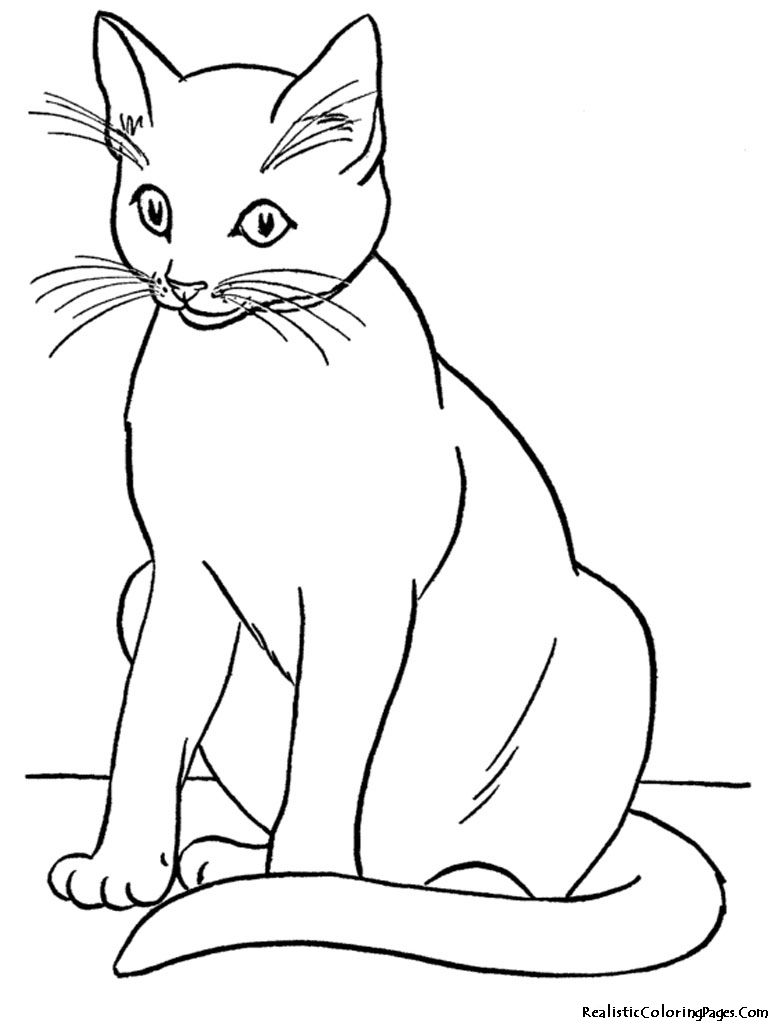 real kitty coloring pages how to sketch a cat step 8 real pages coloring kitty
