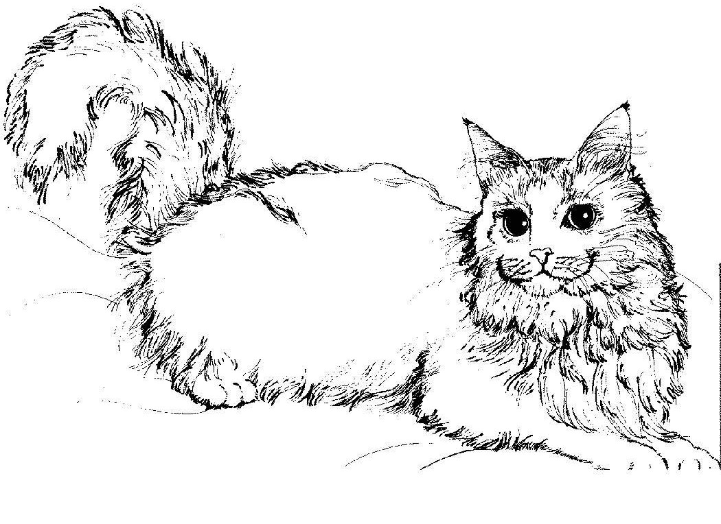 real kitty coloring pages kitten realistic cat coloring pages cat coloring page coloring kitty real pages