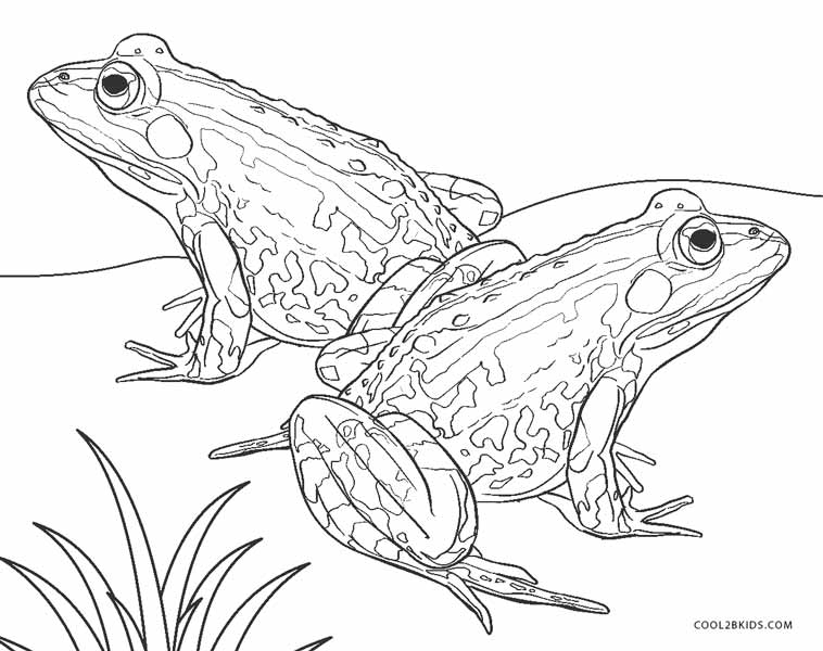 realistic frog coloring pages frog coloring pages picture whitesbelfast pages frog realistic coloring