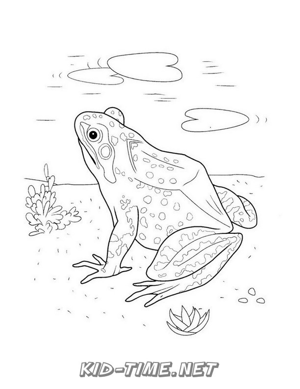 realistic frog coloring pages line drawing of frogs at getdrawings free download frog pages coloring realistic