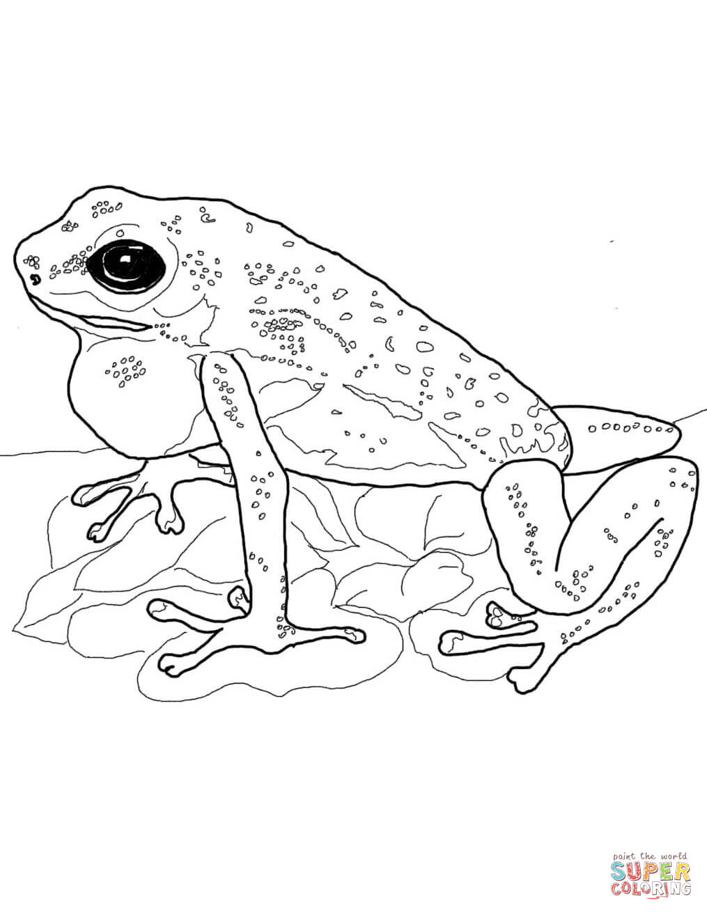 realistic frog coloring pages realistic frog coloring pages 005 kids time fun places coloring pages frog realistic
