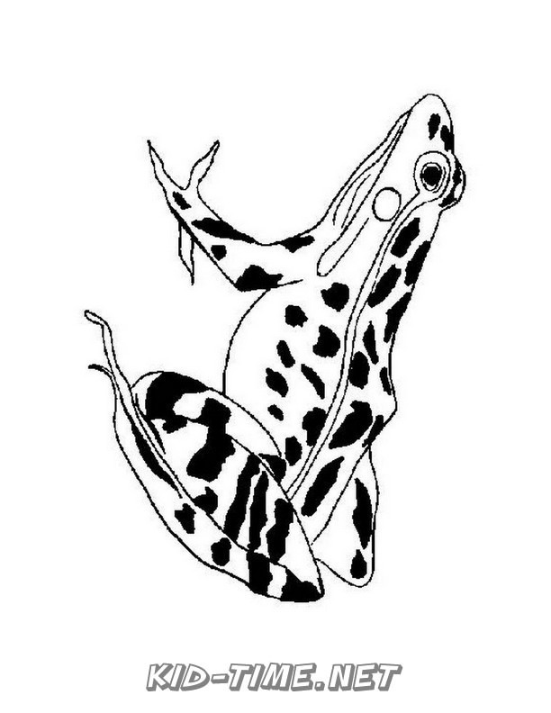 realistic frog coloring pages realistic frog coloring pages 015 kids time fun places pages realistic coloring frog