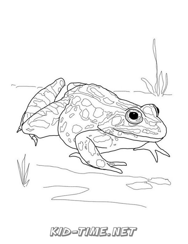 realistic frog coloring pages realistic frog coloring pages 019 kids time fun places frog coloring realistic pages