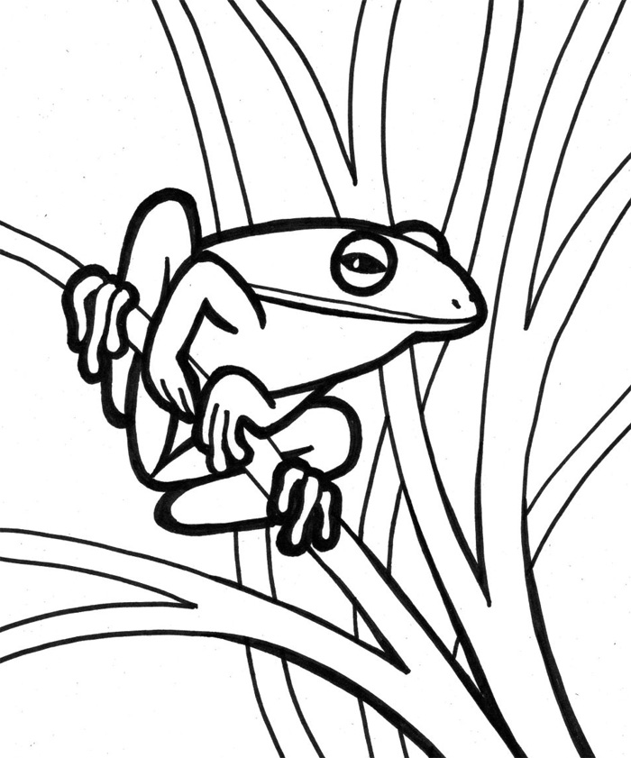 realistic frog coloring pages realistic frog coloring pages 052 kids time fun places realistic pages frog coloring