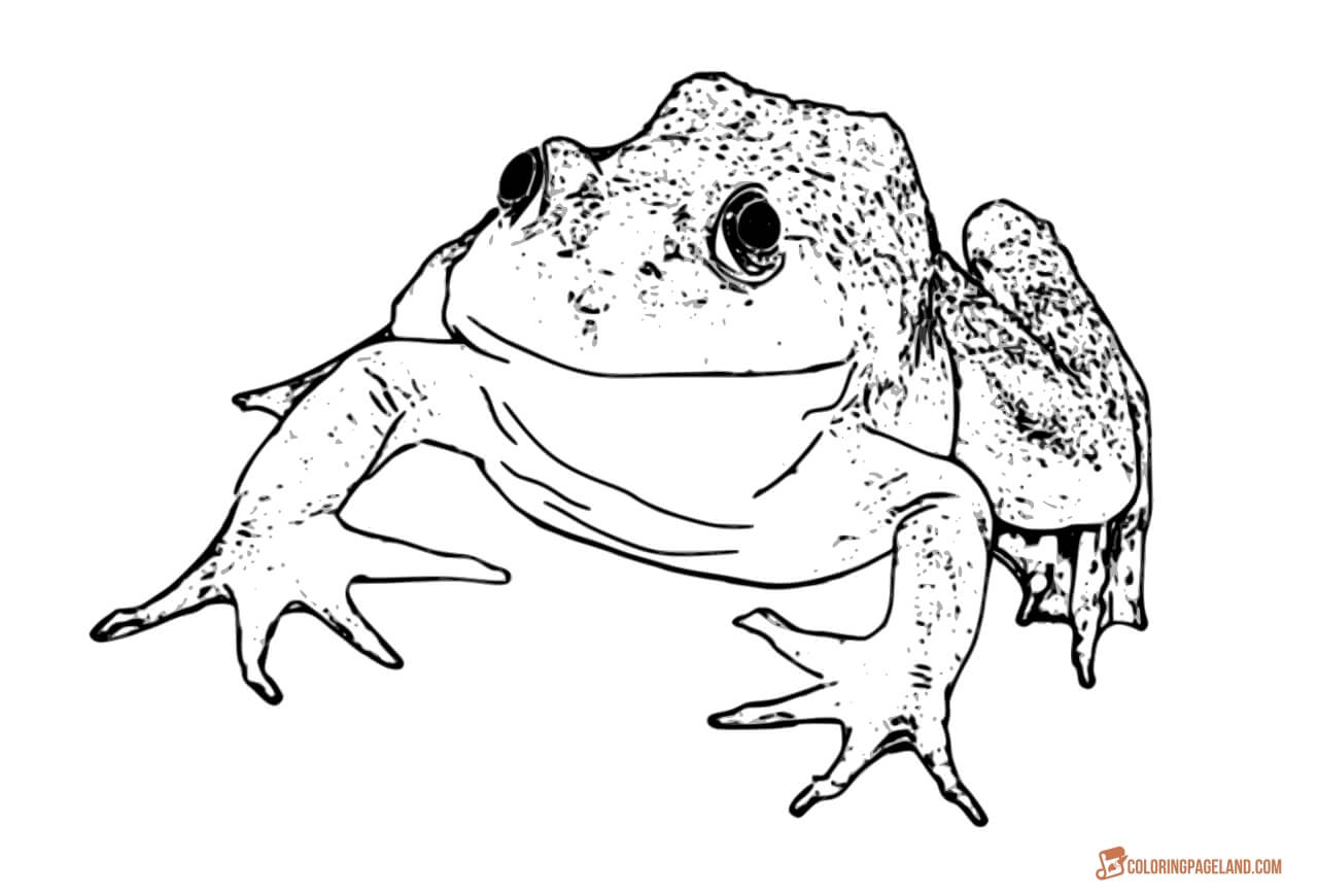 realistic frog coloring pages realistic frog coloring pages clipart panda free coloring realistic frog pages