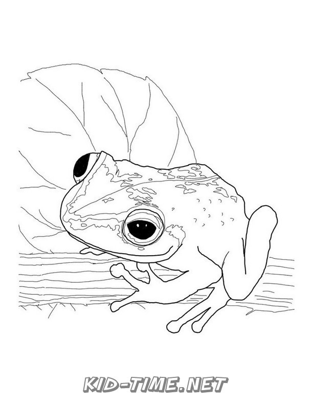 realistic frog coloring pages realistic frog coloring pages clipart panda free frog pages realistic coloring