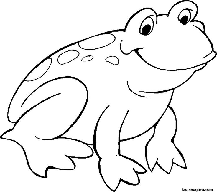realistic frog coloring pages realistic frog coloring pages free download on clipartmag realistic frog coloring pages