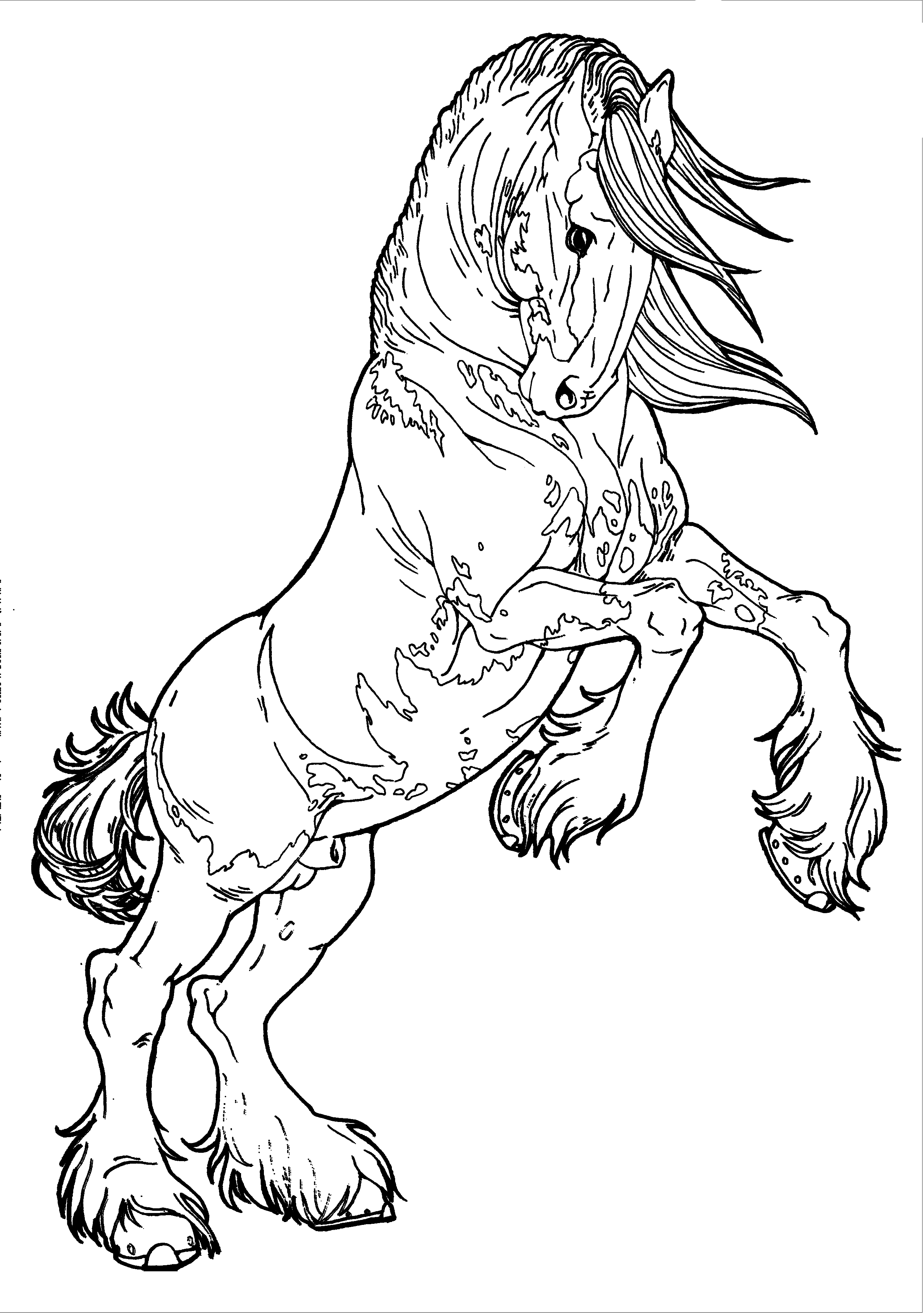 realistic horse coloring pages draft horse coloring pages at getcoloringscom free horse pages realistic coloring