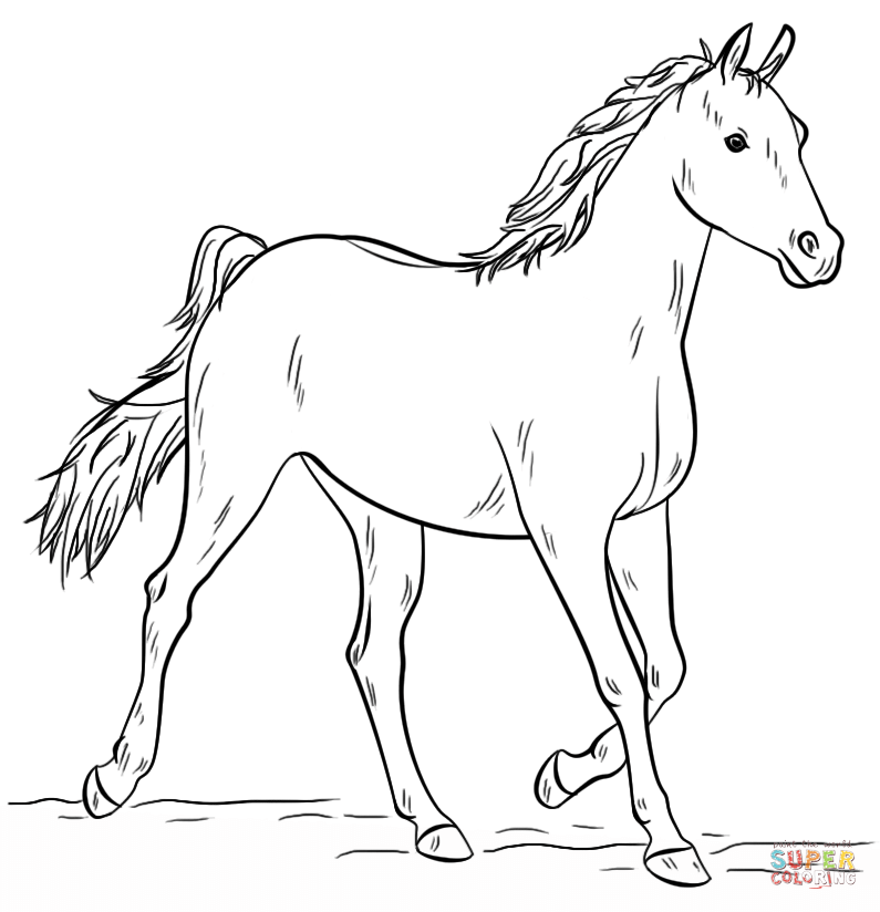 realistic horse coloring pages grey arabian horse coloring page free printable coloring coloring horse pages realistic