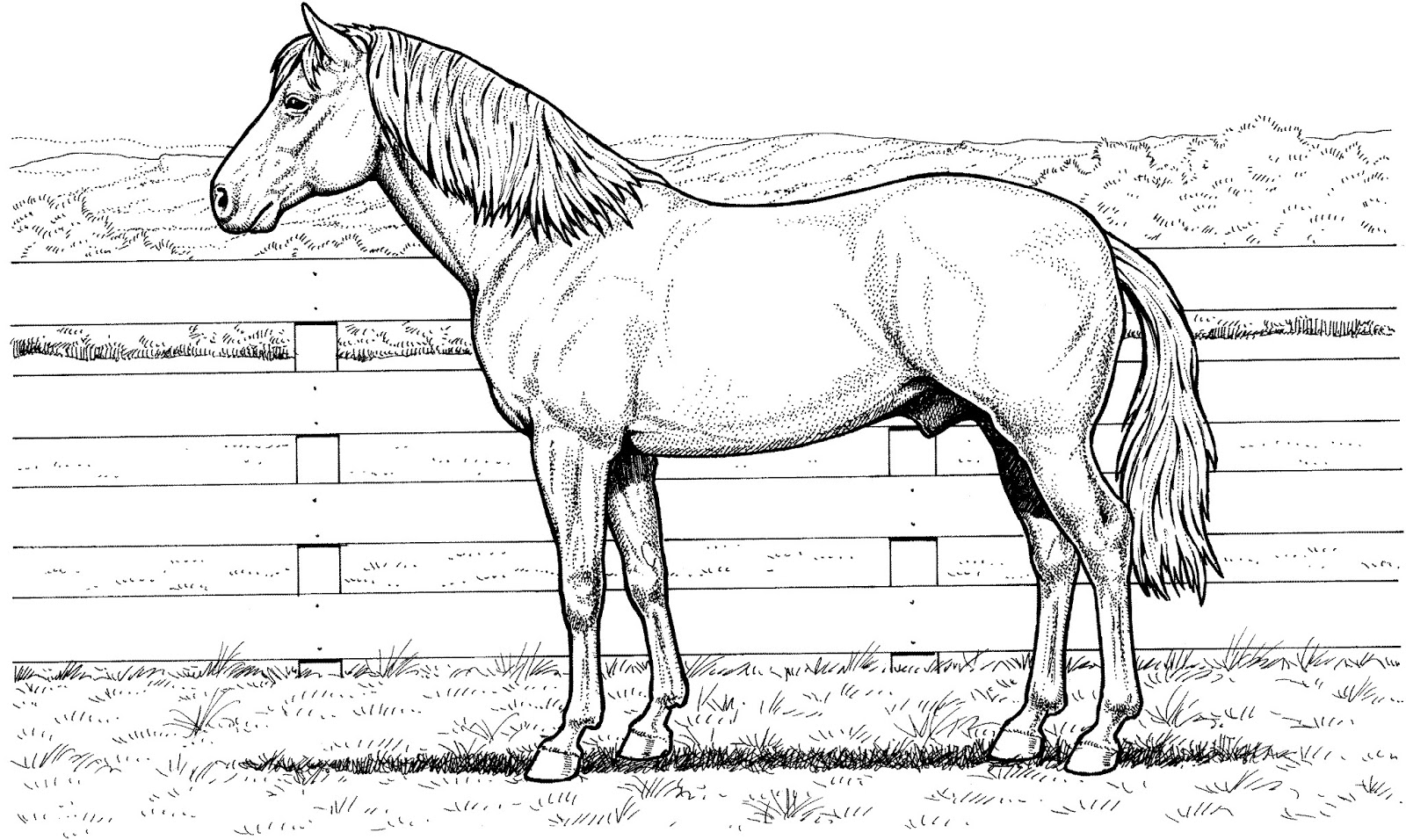 realistic horse coloring pages horse rearing up drawing at getdrawings free download horse coloring pages realistic