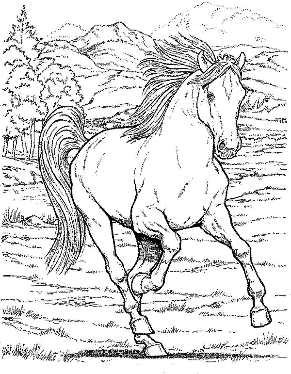 realistic horse coloring pages realistic horse coloring pages at getcoloringscom free pages horse realistic coloring