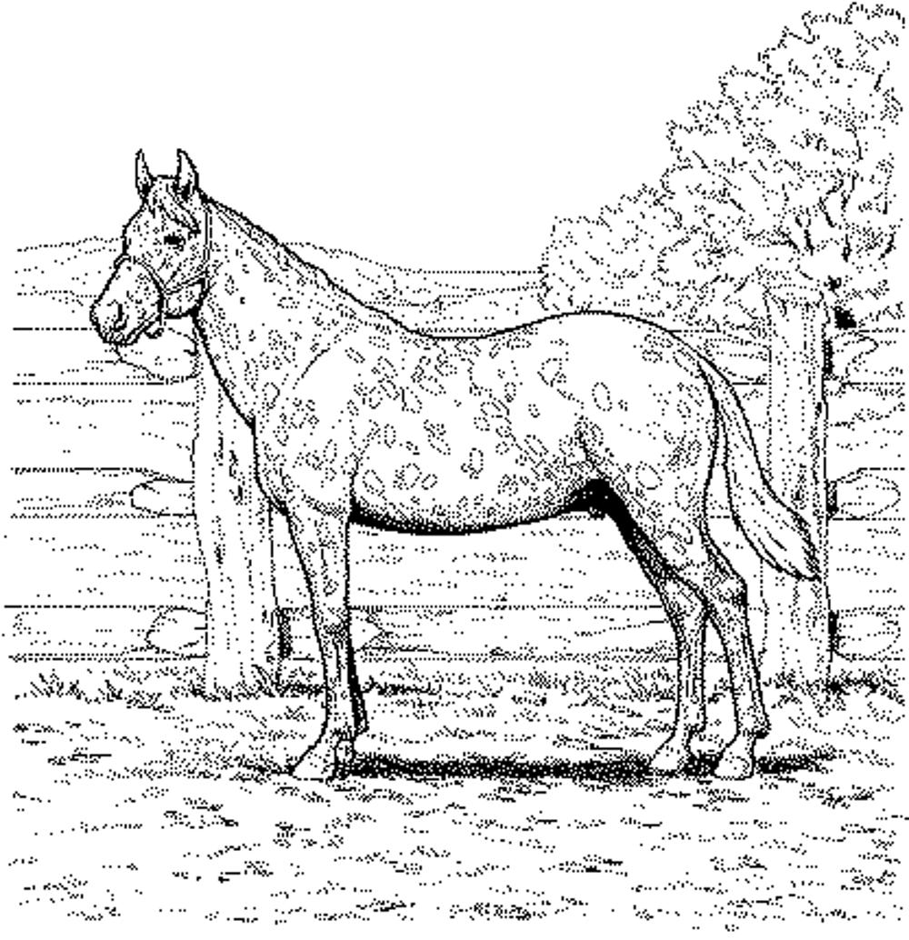 realistic horse coloring pages realistic horse coloring pages to download and print for free coloring realistic pages horse 1 1